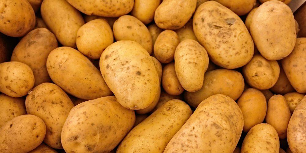 Kartoffel 1